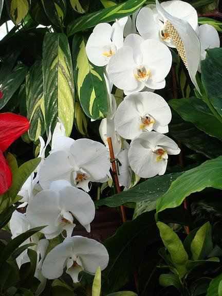 цветочный хоровод 96888