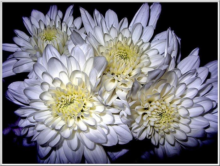 цветочный хоровод 55446