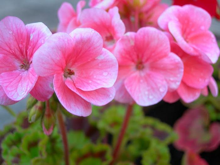 цветочный хоровод 37556