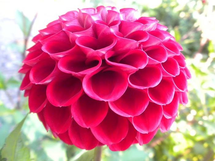цветочный хоровод 13420