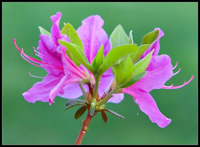цветочный хоровод 12594