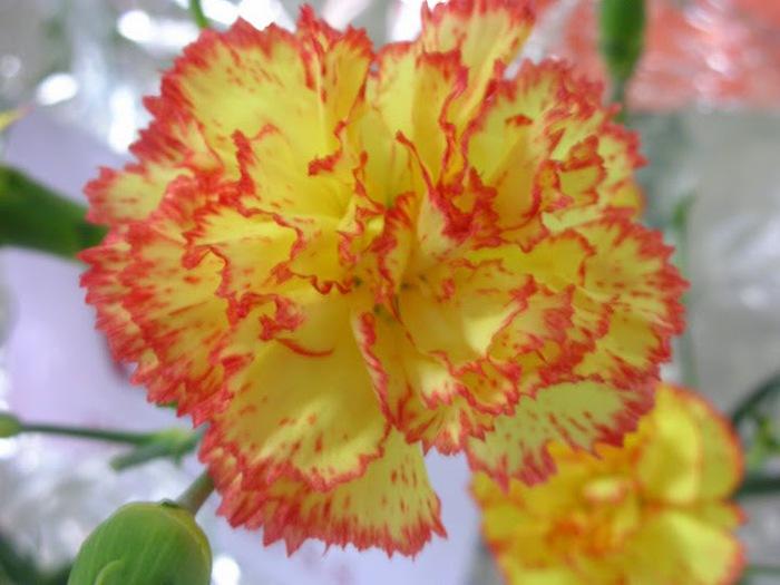 цветочный хоровод 41439