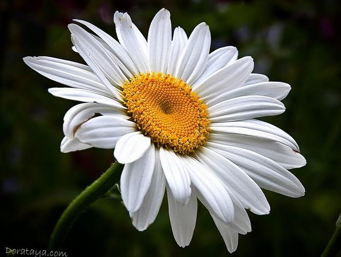 цветочный хоровод 68856