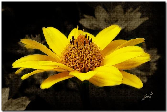цветочный хоровод 45073