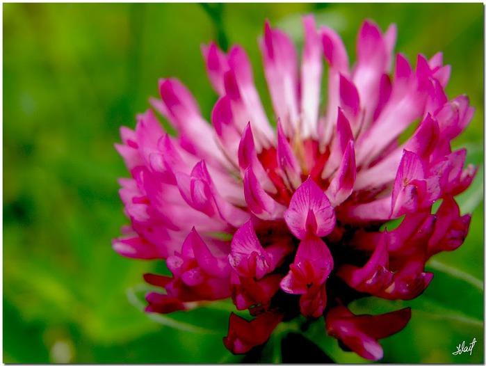 цветочный хоровод 57802