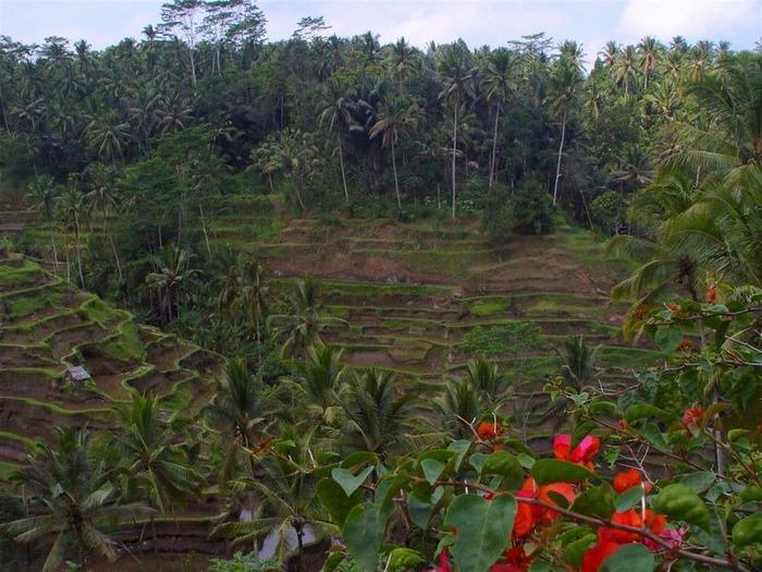 Фотопутешествие по Бали 20