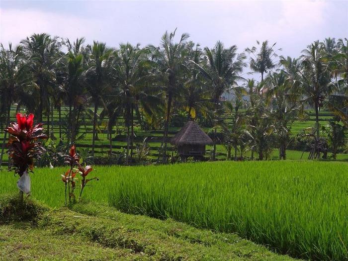 Фотопутешествие по Бали 22