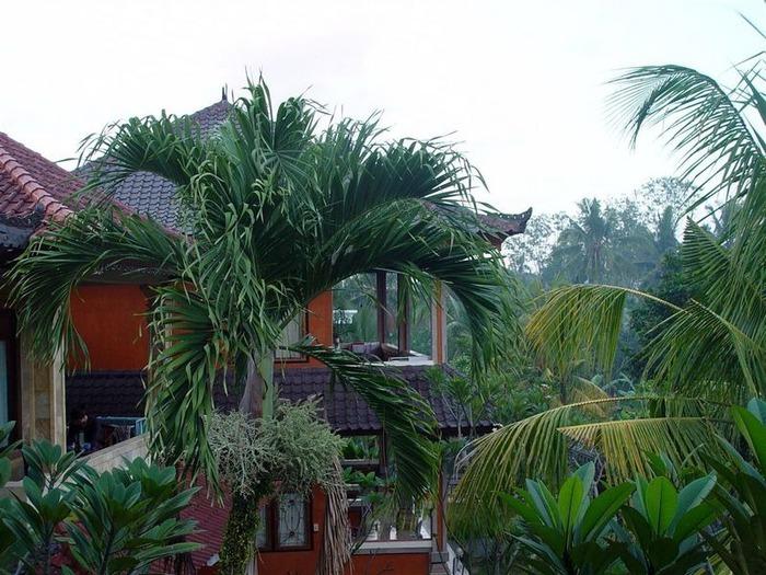 Фотопутешествие по Бали 26
