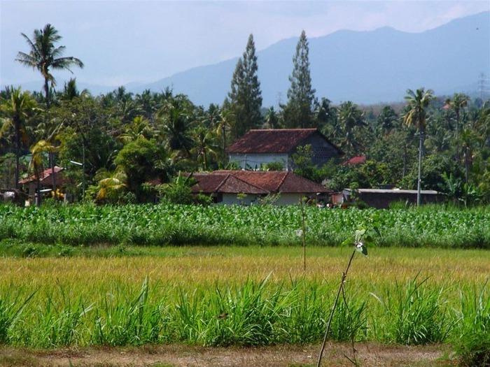 Фотопутешествие по Бали 45