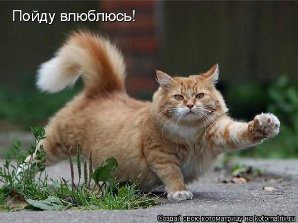http://img1.liveinternet.ru/images/attach/c/2//71/883/71883806__1_4_gif.jpg
