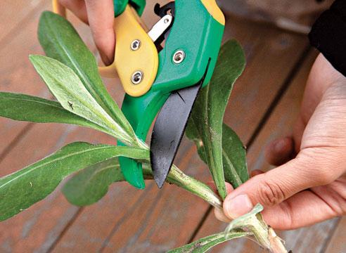 размножение комнатных растений черенкование и деление