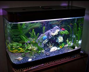 аквариум (304x246, 111 Kb)