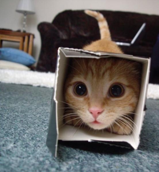 Я лучше всех умею прятаться