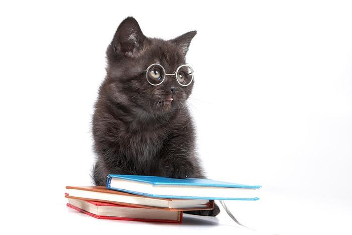 Чёрный учёный кот