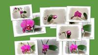 Рождение орхидеи (часть II)