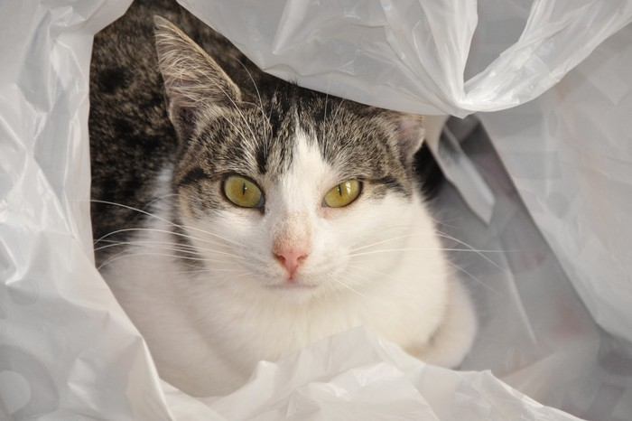 a-cat-in-the-bag-by-straymuse-1024x682 (700x466, 59 Kb)
