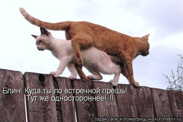 http://img1.liveinternet.ru/images/attach/c/2//72/329/72329731_PRIK.jpg