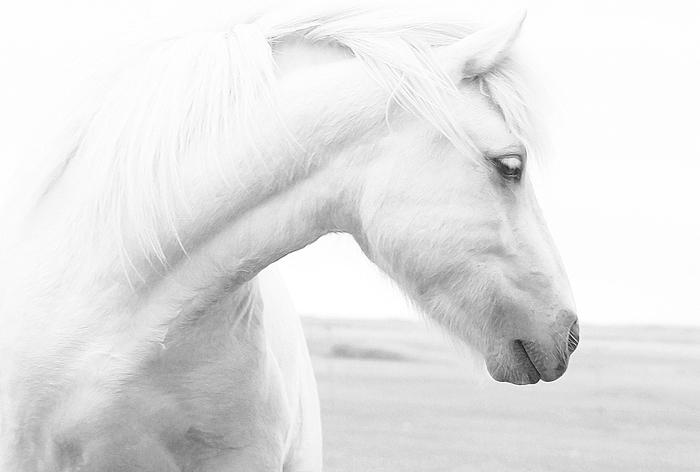 Все мы немного лошади