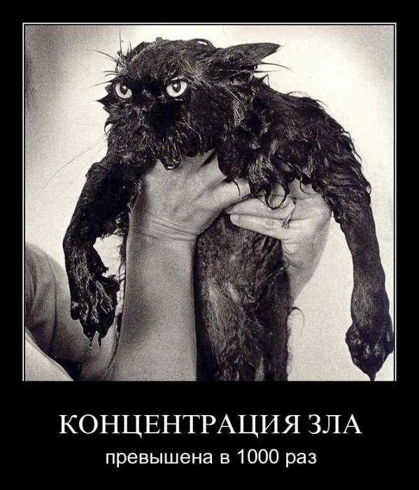 http://img1.liveinternet.ru/images/attach/c/2//72/654/72654271_demotivator013.jpg