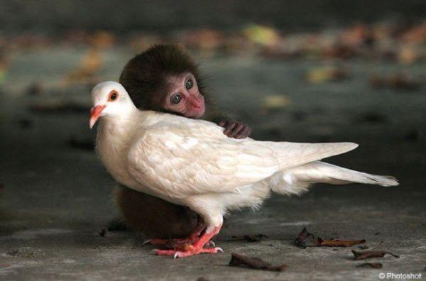 изображения животных: