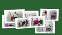 Рождение орхидеи (часть III)