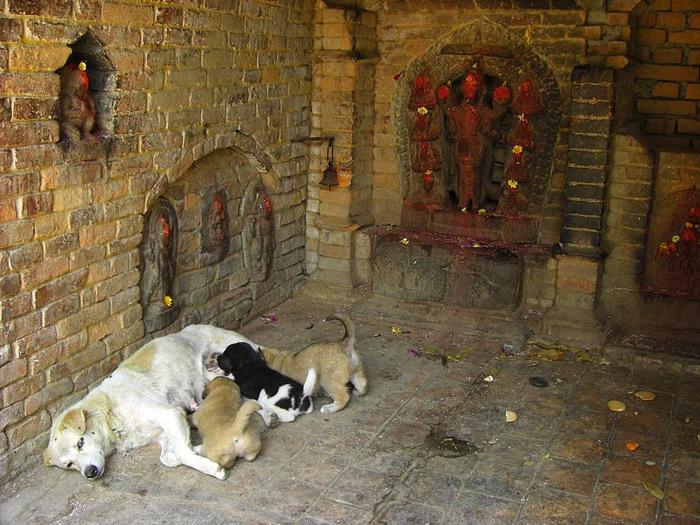 Бхактапур -«город верующих» 87919