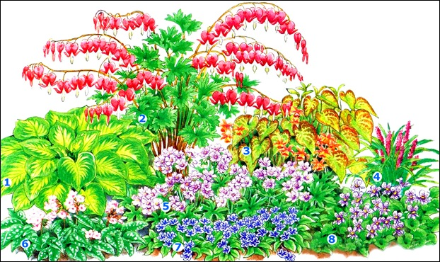 Цветы многолетники | Записи в