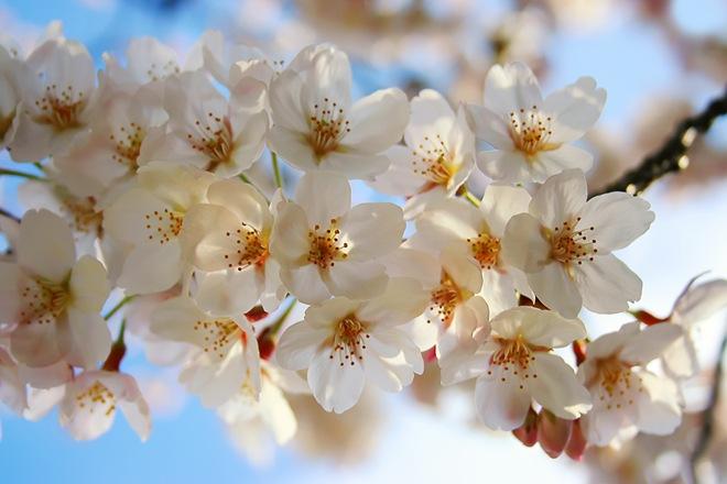 Радуемся малому - красота природы весной