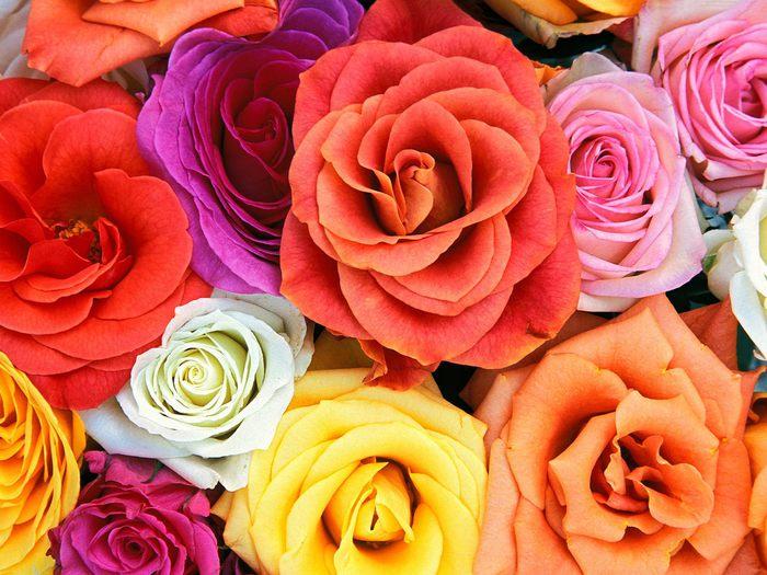 24_flowers (700x525, 86 Kb)