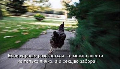 Бежит курица