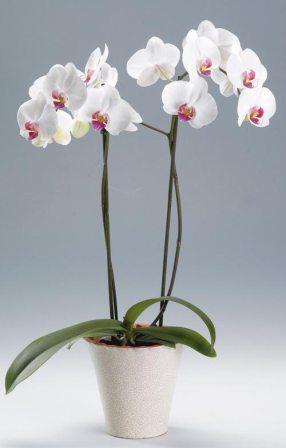 Цветков и подставки под цветы в казани