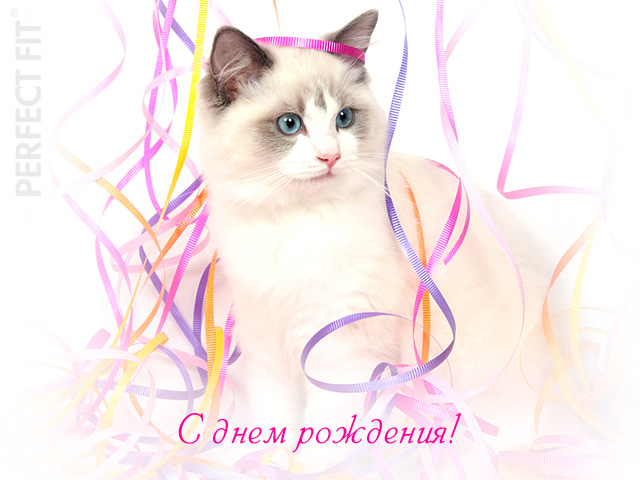 Открытка с днем рождения женщине с кошками 4