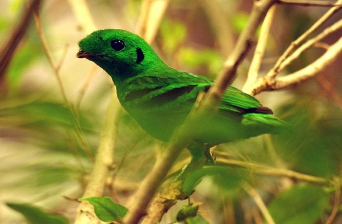 ...домашняя птица восхитительный петух на фото с красной гривой...