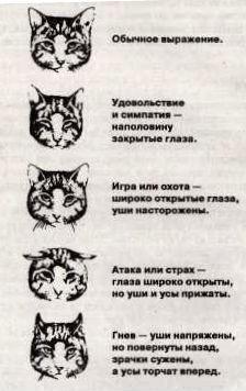Какие чувства есть у кошки