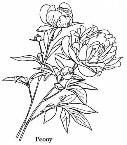 Рисунки цветов как настоящие