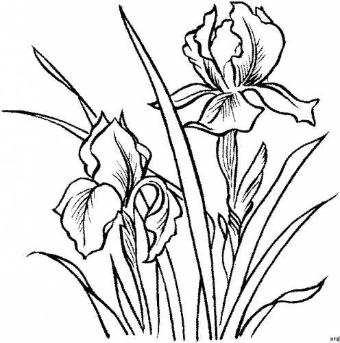 Раскраска Цветы Страница 15.