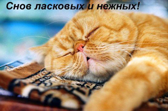http://img1.liveinternet.ru/images/attach/c/2/65/856/65856854_1288208266_40744542_snov_kot.jpg
