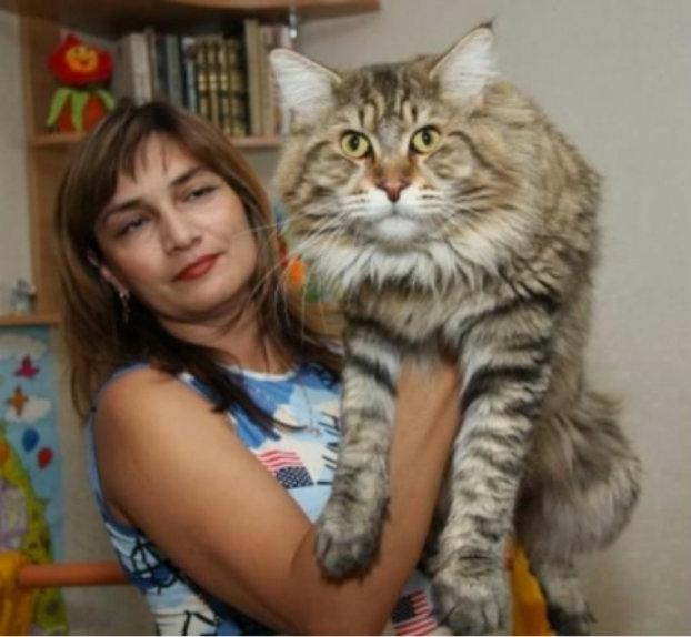 коты мейн кун ловят ли они мышей достойными производителями термобелья