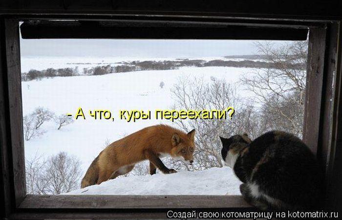 http://img1.liveinternet.ru/images/attach/c/2/65/929/65929639_kotomatri_13.jpg