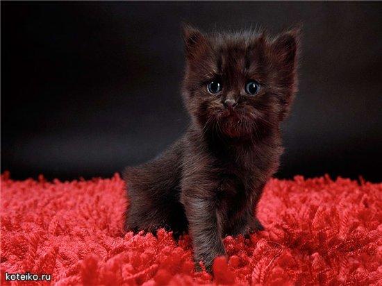 Рубрики кошки коты и котята gatti cats