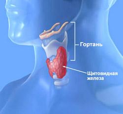 диетолог сургут