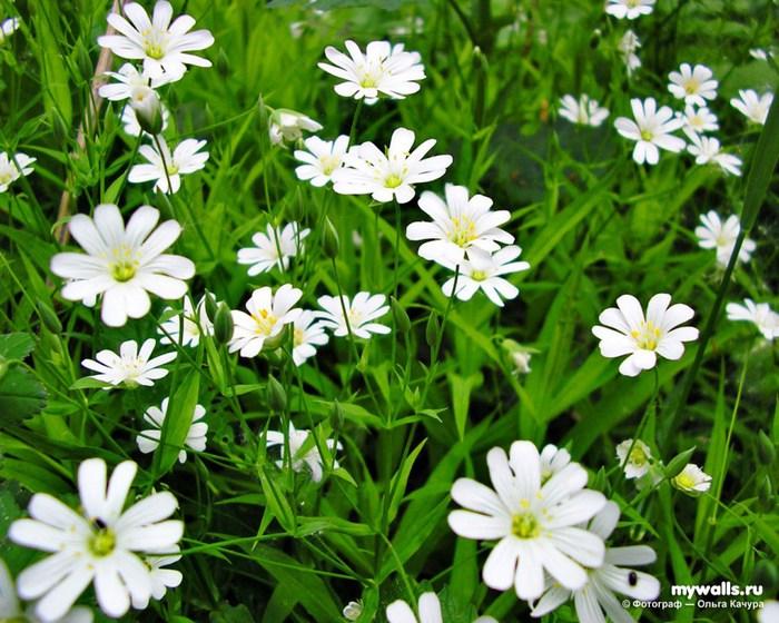 Цветы* Группа Стаса Намина «Цветы» - Летний Вечер