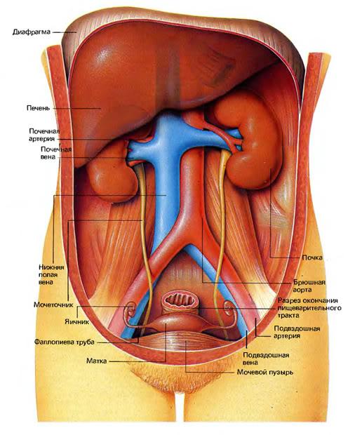 Фото женского органа изнутри
