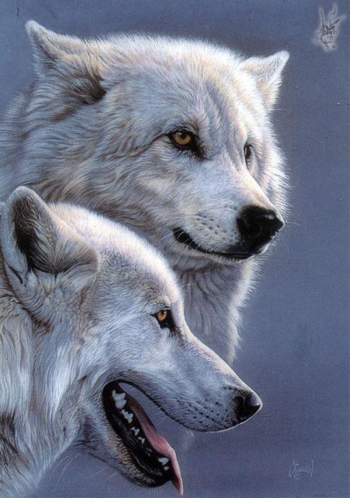 """Схема вышивки  """"Белые волки """" ."""