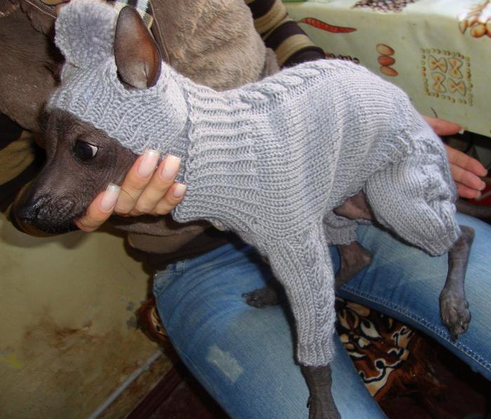 Вязаный комбинезон для собак своими руками
