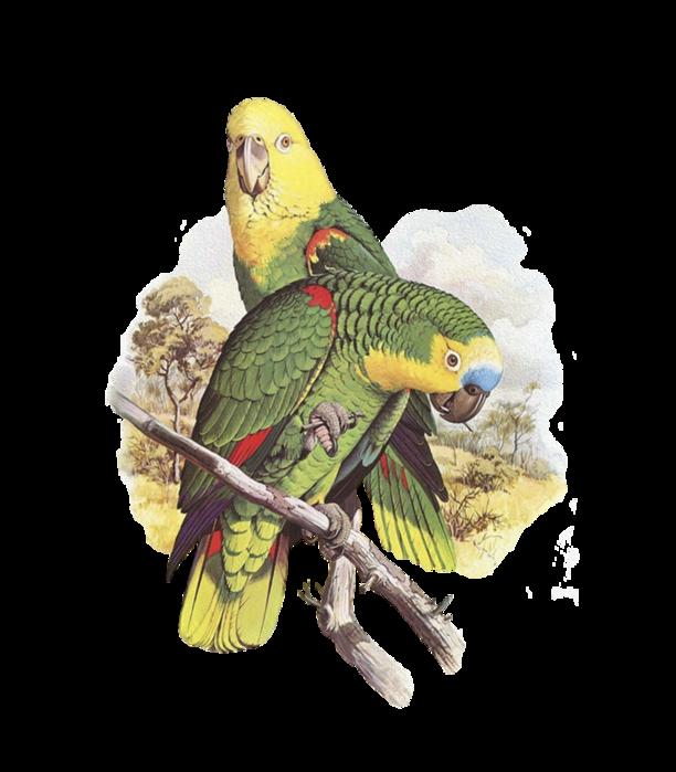 """Оригинал схемы вышивки  """"попугай """" ."""