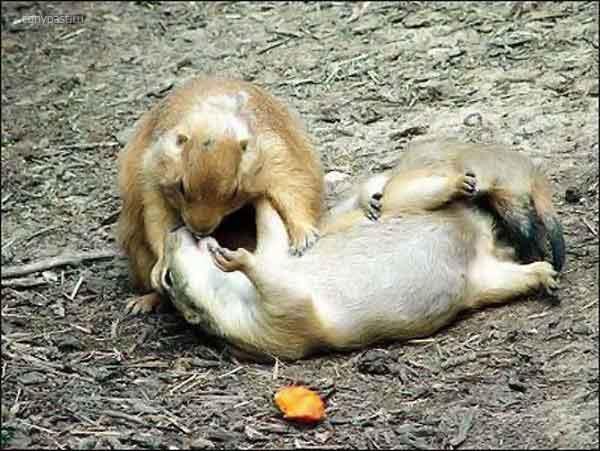 Целующиеся животные обсуждение на