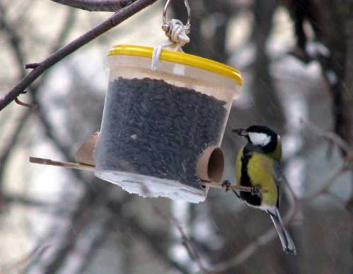 В Ярославле выбрали лучшую кормушку для птиц.