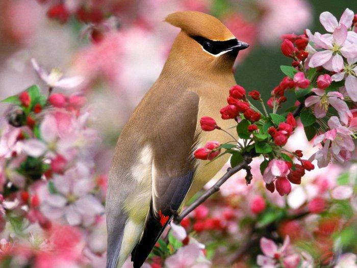 DataLife Engine Версия для печати Птички.