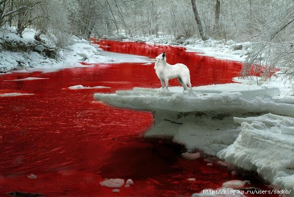 темна алая кровь: